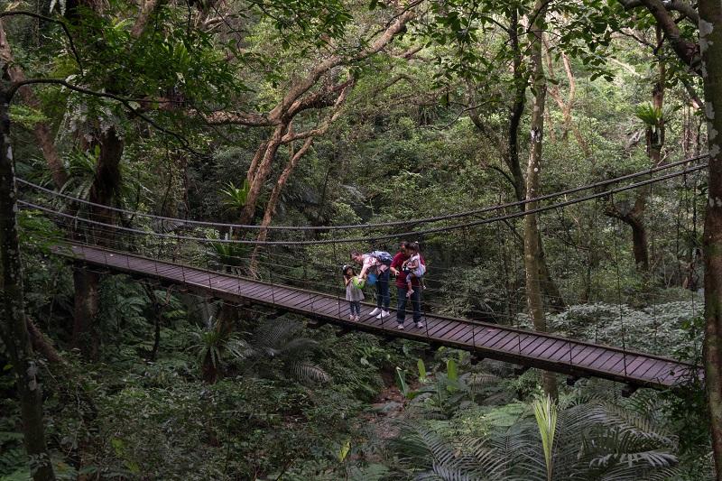 亞熱帶雨林綠色大冒險 大板根森林溫泉渡假村