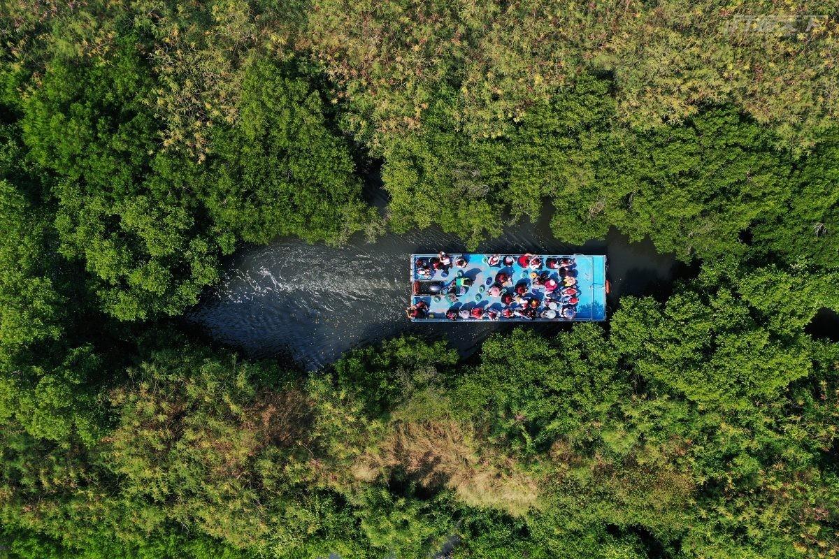 台南旅遊|台版亞馬遜河在這 四草綠色隧道無動力小船緩行國際級濕地間