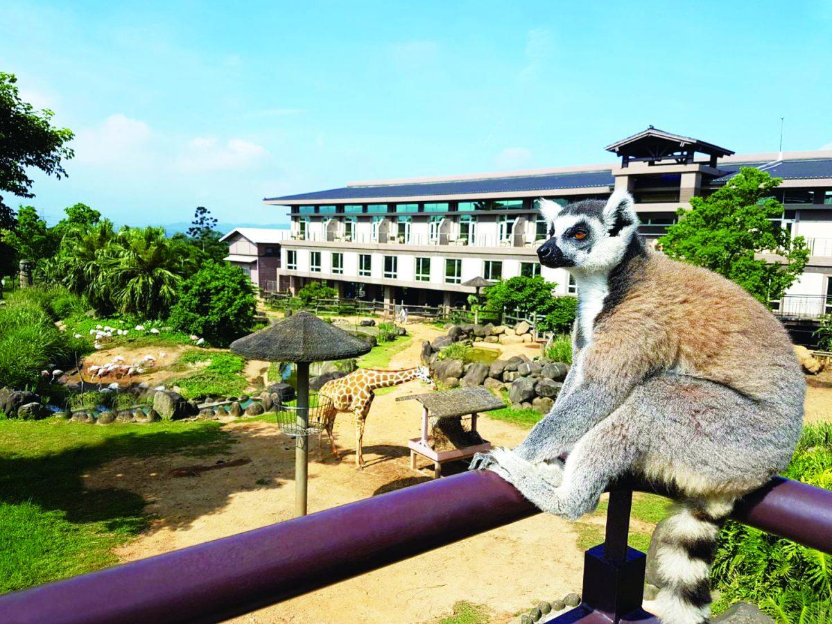 新竹,關西,六福莊,六福村,動物派對,非洲歷險