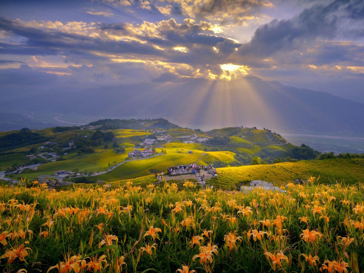 花蓮,金針花季,金針花毯,六十石山,赤科山