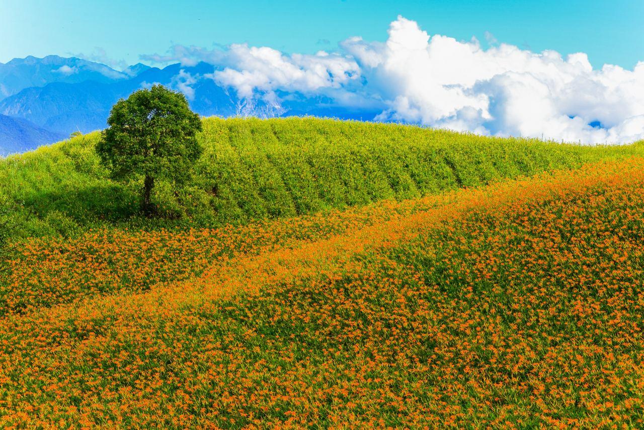 花東,陸海空,爬樹,SUP,金針花