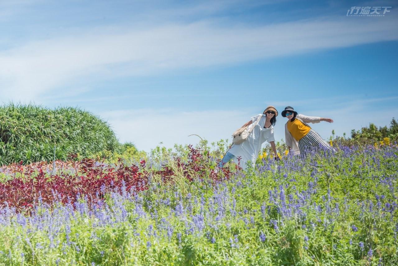 ▲四八高地的戶外則規劃成四季都有花可看的愜意花園。