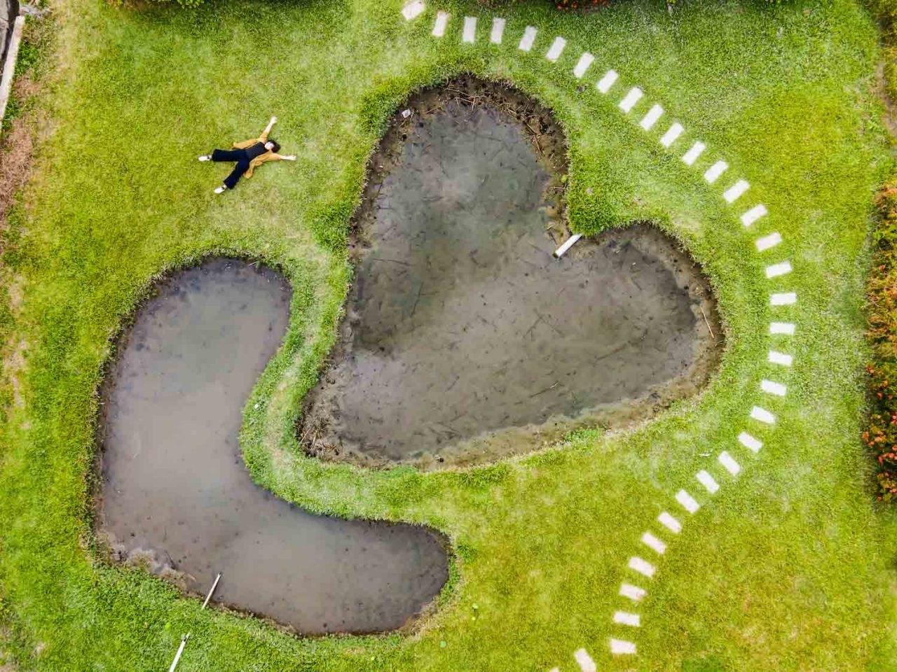 彰化,花樹銀行,地球,種樹,雙心池塘,三春老樹