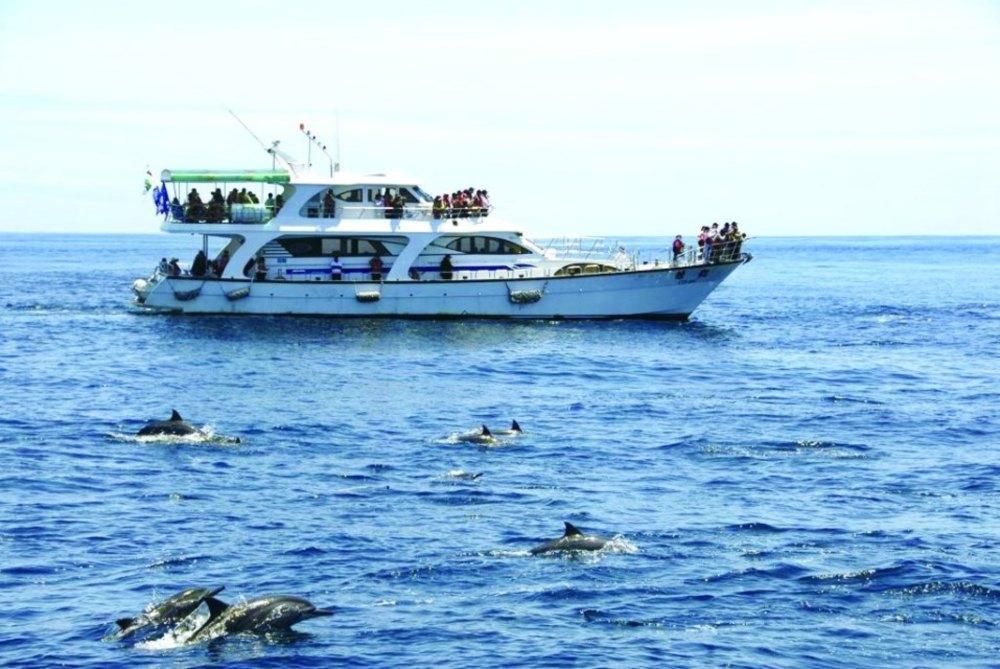 ▲賞鯨團每年4 ~ 10月是最適合賞鯨的時間。