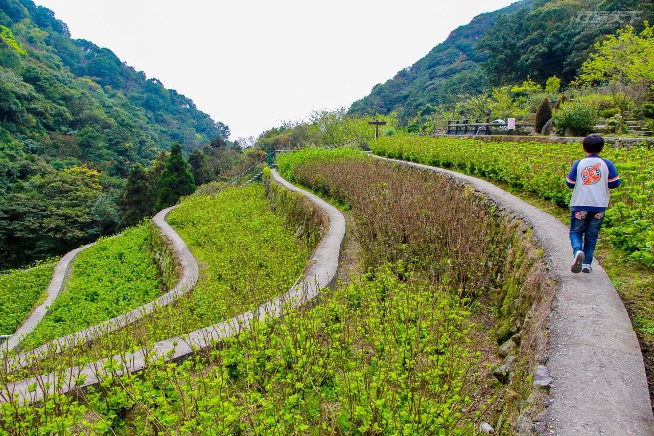 秘境美食|台北後花園山中美食 鄉野料理品嚐食物原味