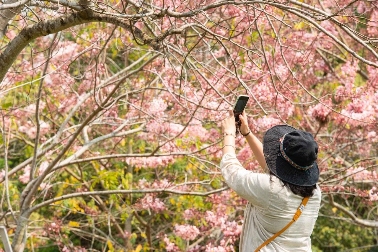 ▲4月還會有小農市集舉行,拍花海、吃在地最對味。