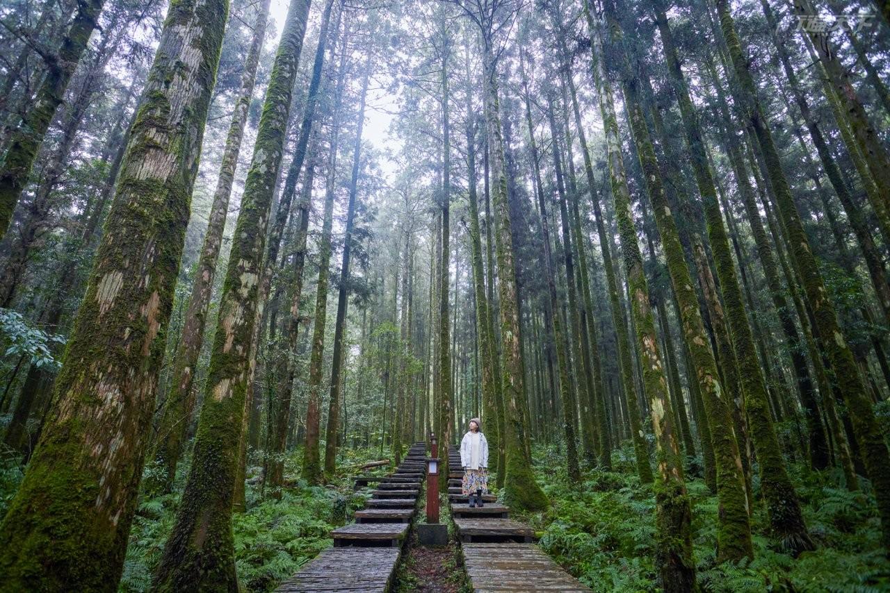 森林旅遊|淨化心靈享受森林浴 這5個地方一定要走一遭