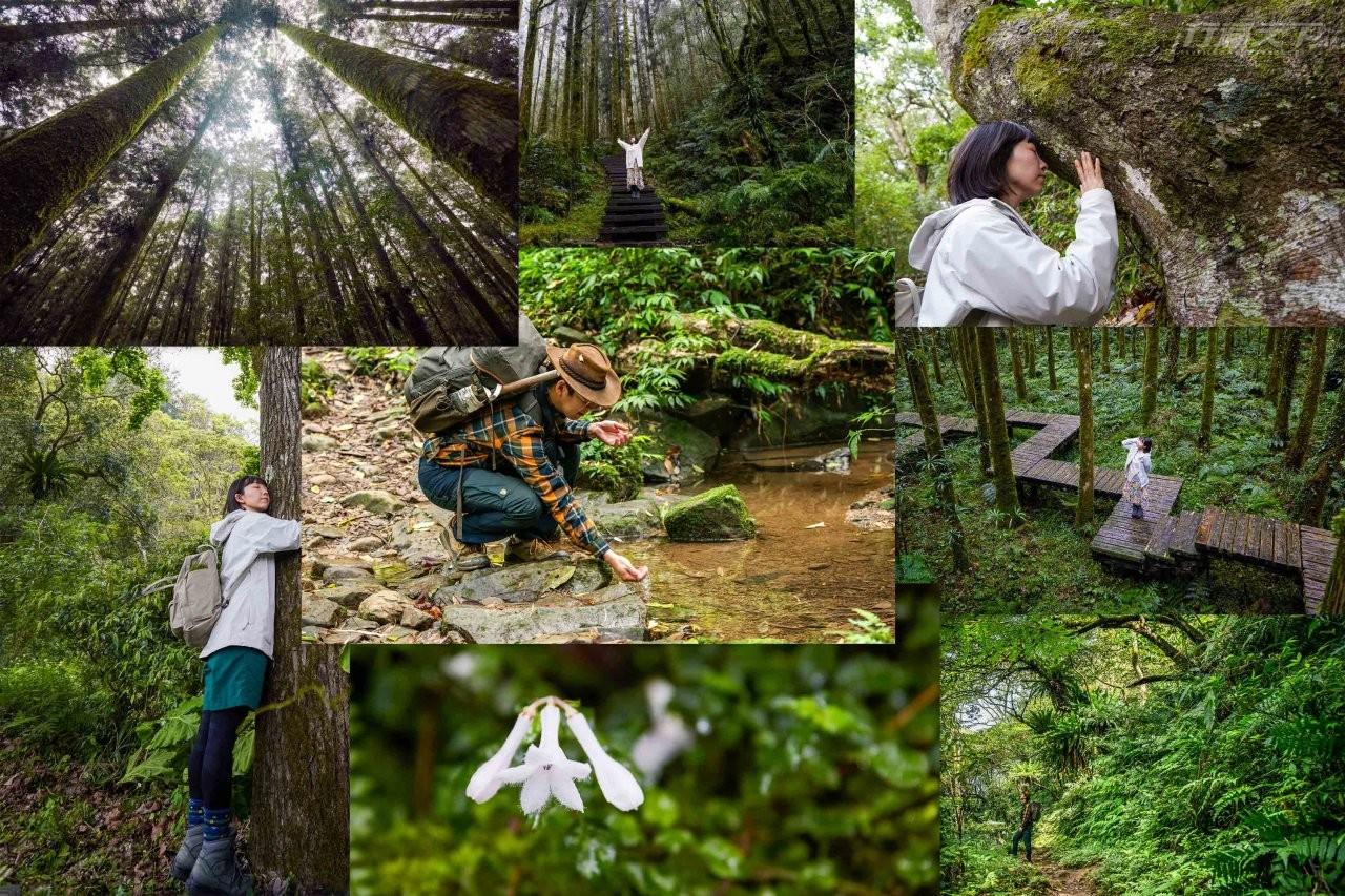 森林,拜訪森林,吳雲天,必做