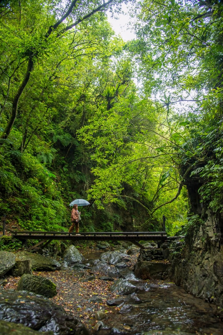 ▲穿梭於仙氣濃郁的石磐步道極為唯美。
