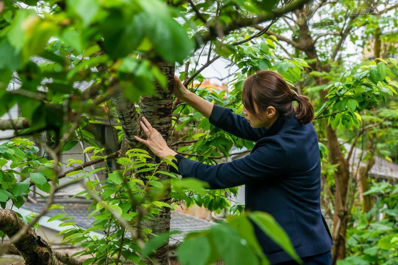 ▲詹鳳春說:「你們看到的是樹,我看到的是同類,對我而言,每棵樹都是獨立的個體,擁有獨特的個性,超過60歲、吸收地氣的樹木,甚至有靈性、可以溝通。」
