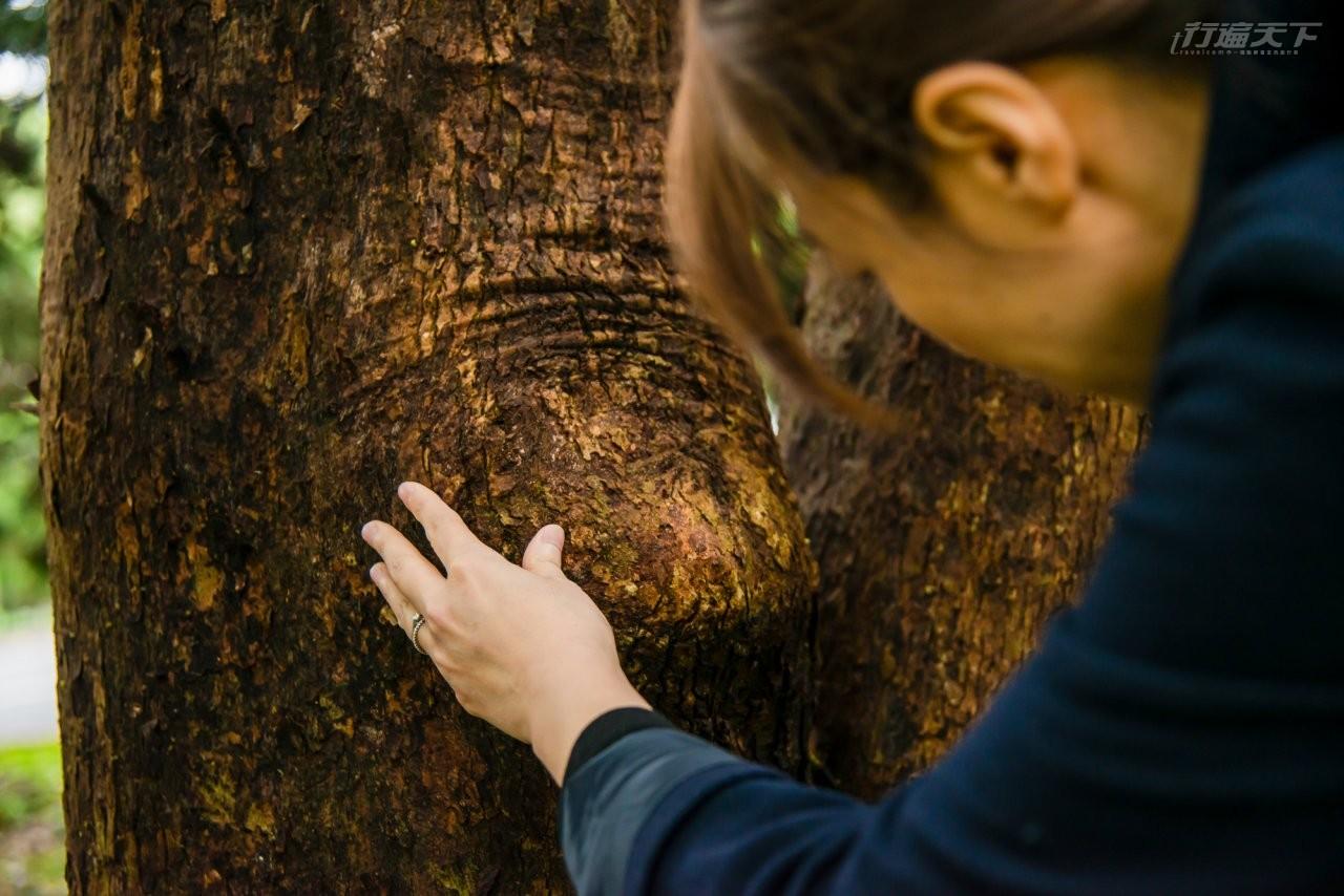▲詹鳳春認為都市的樹相對較可憐,更需要被醫療拯救。
