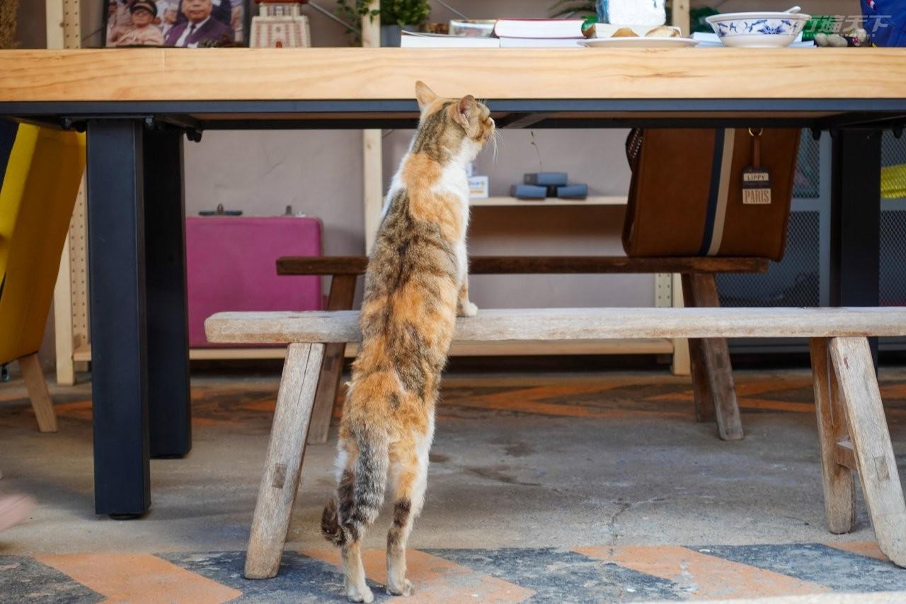 ▲連貓咪隨時都可以來串門子。