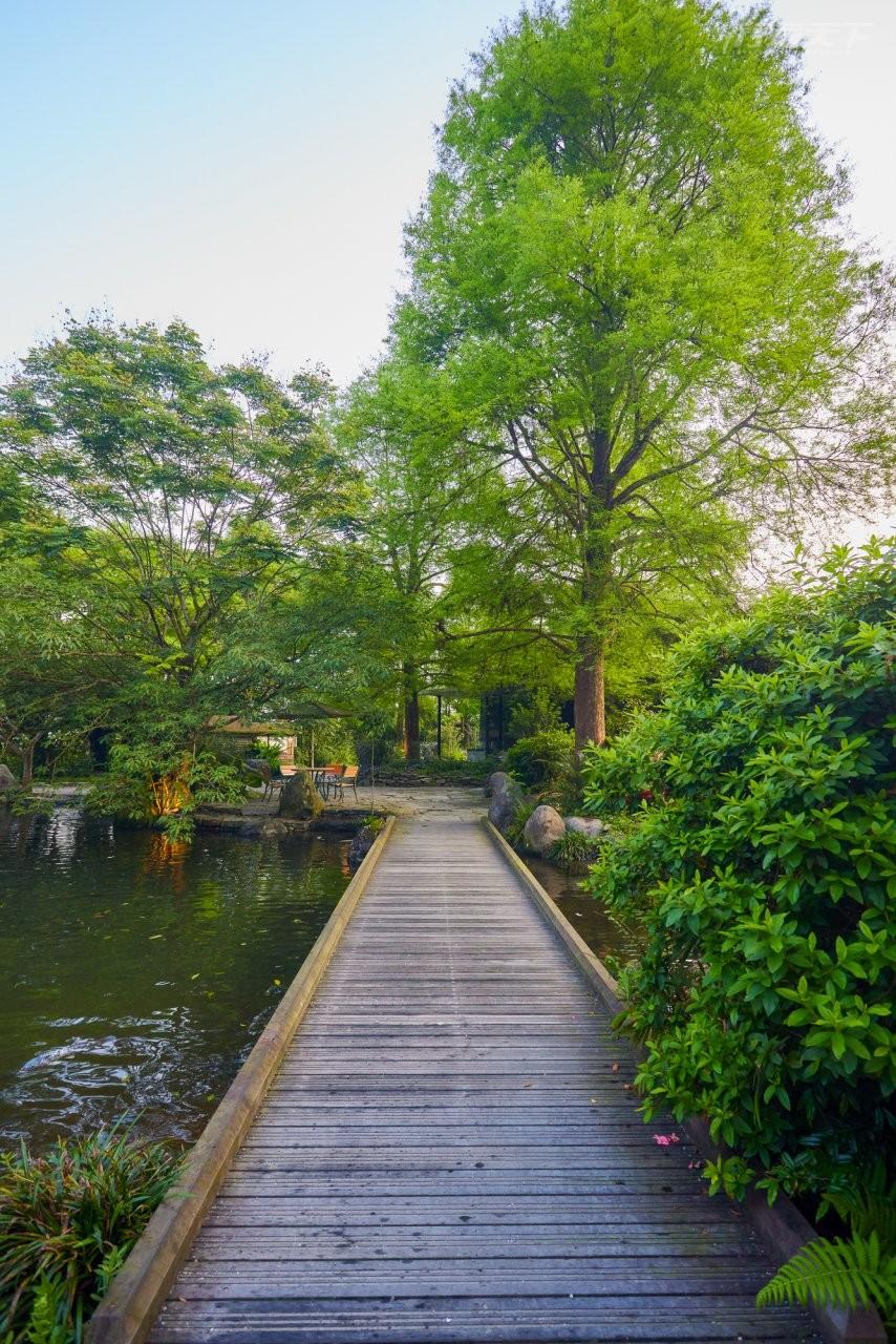 ▲農場步道四通八達,處處可見高聳入天的落羽松等多種樹木,水塘裡也養著許多魚兒,慢步園區很悠閒。