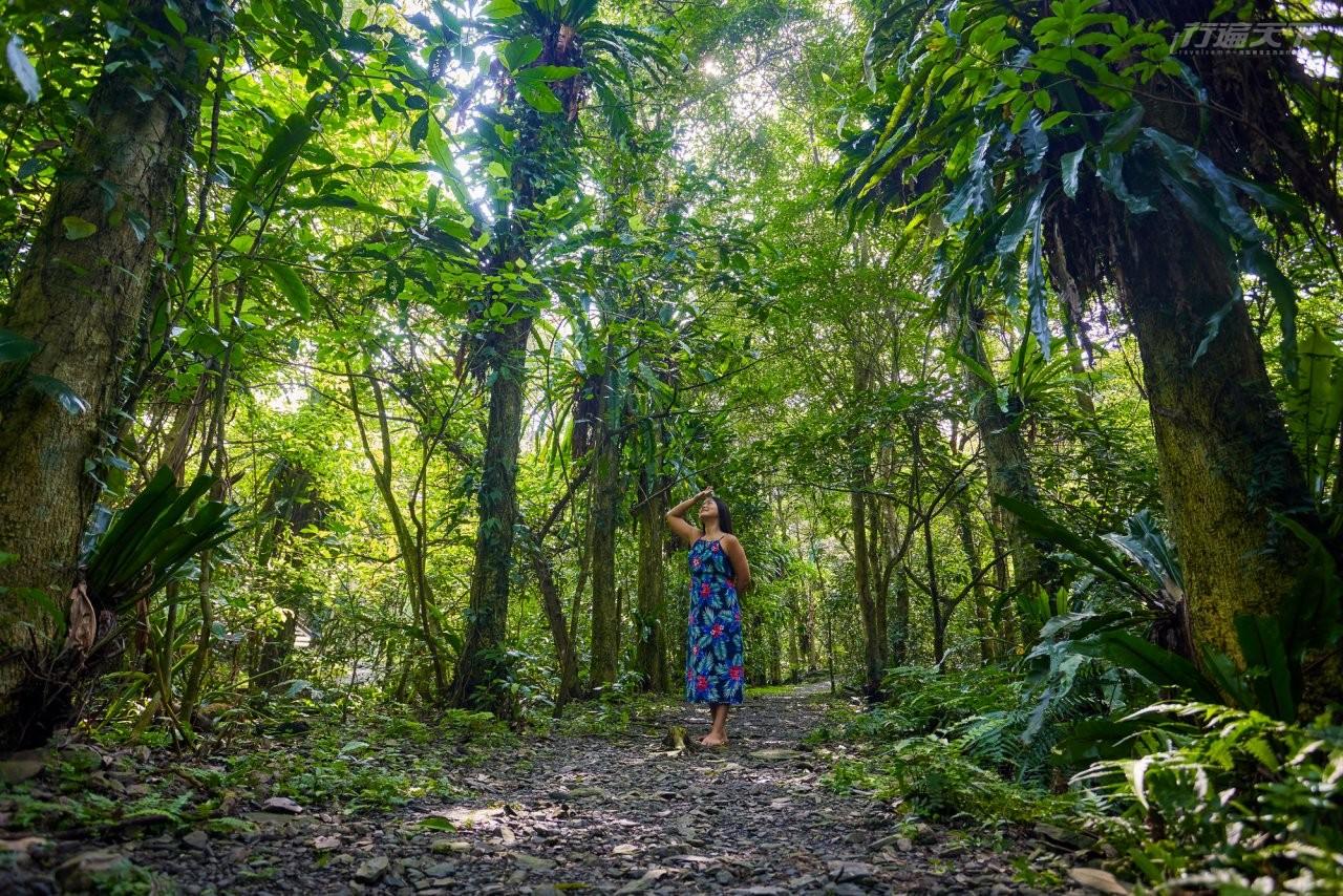 ▲除了建築附近大片落羽松,多走兩步就進入茂密的黑板樹、青楓等原始森林步道。