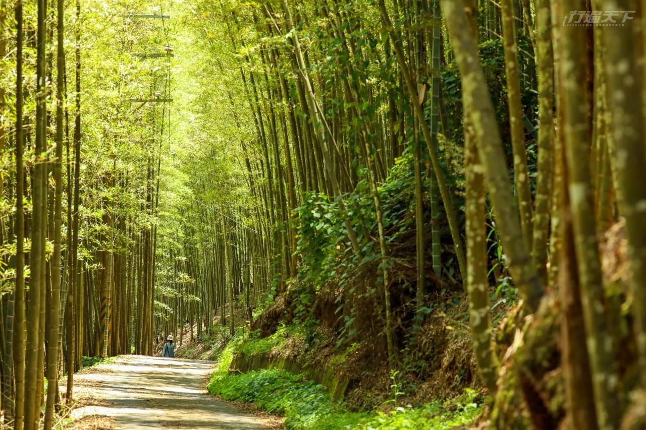 ▲跟著體驗引導,可欣賞臨近孟宗竹林隧道。