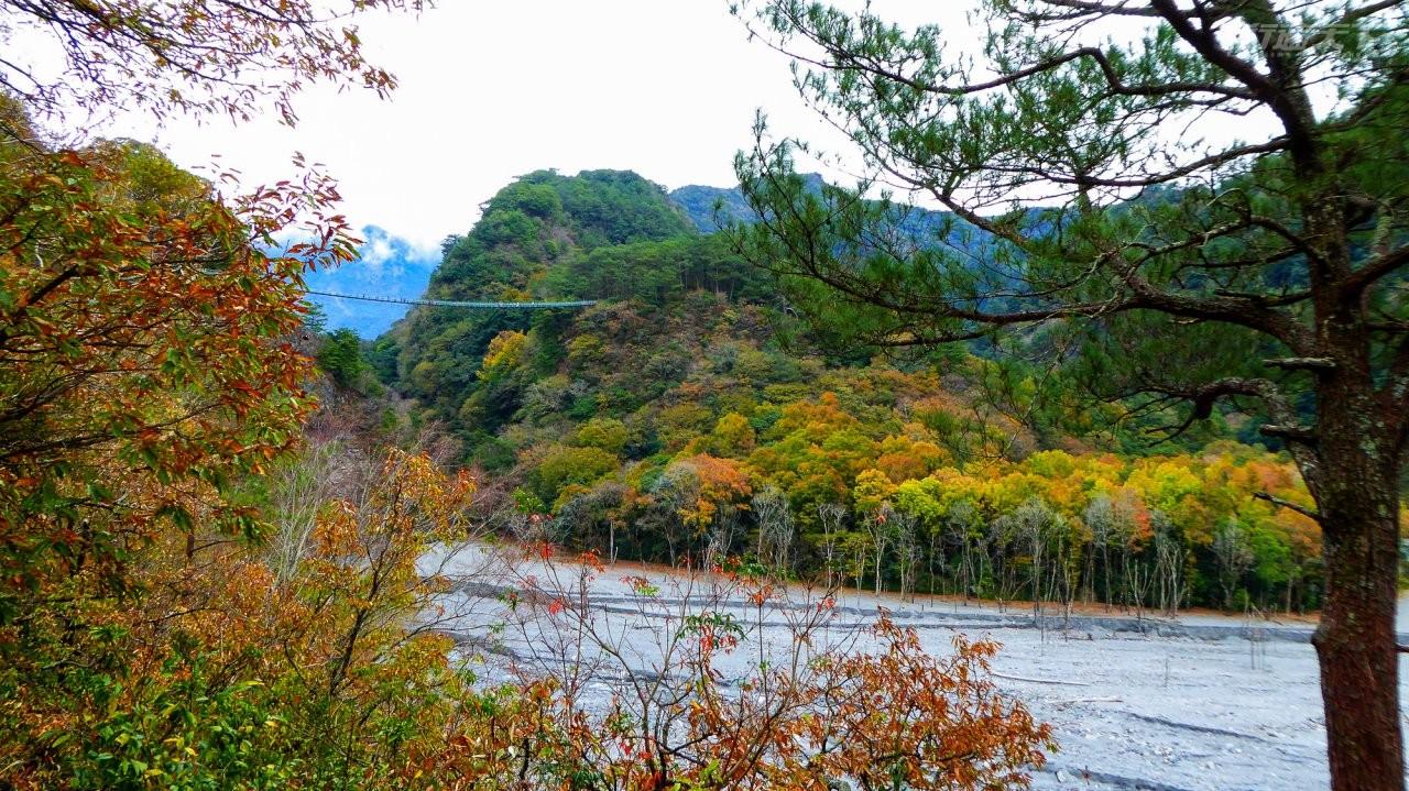 南投景點|全台最有名的賞楓勝地在這裡 奧萬大9月下旬開始陸續換妝中
