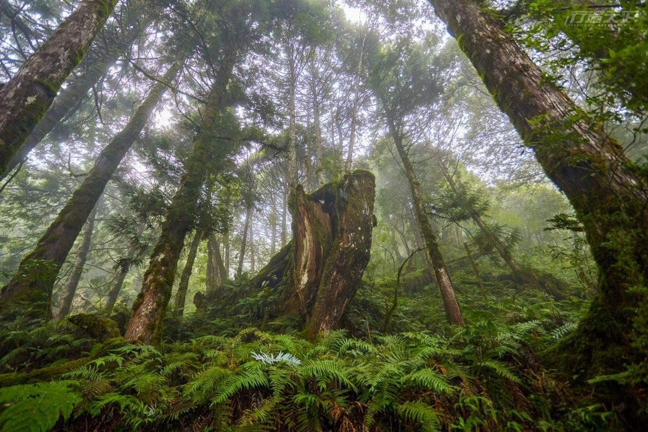 宜蘭景點|宛若走進阿凡達場景中 太平山有著全球最美步道之一