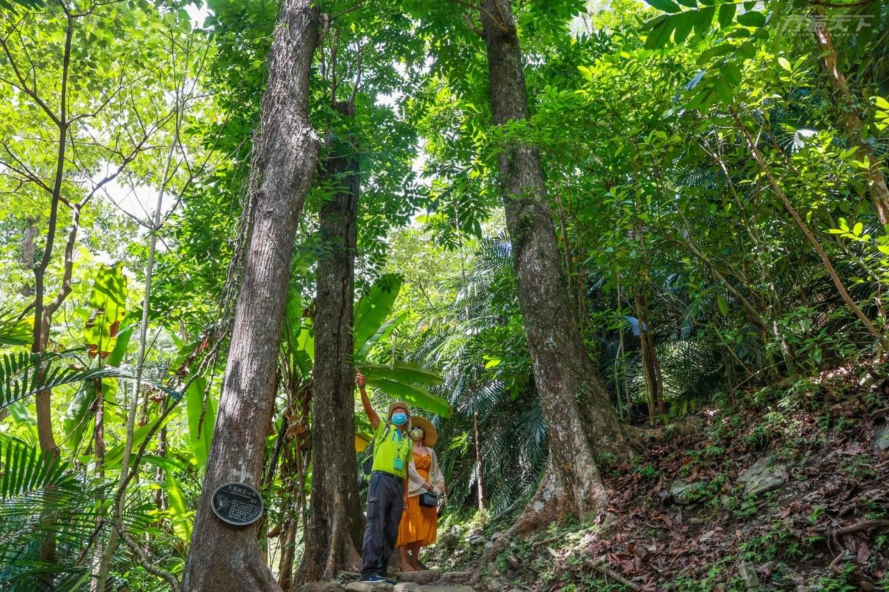 ▲全長1.82公里的森林浴步道,坡度平緩輕鬆好走,步道穿過大葉桃花心木、光蠟樹林,夏日十分涼爽,是園區最推薦的步道。