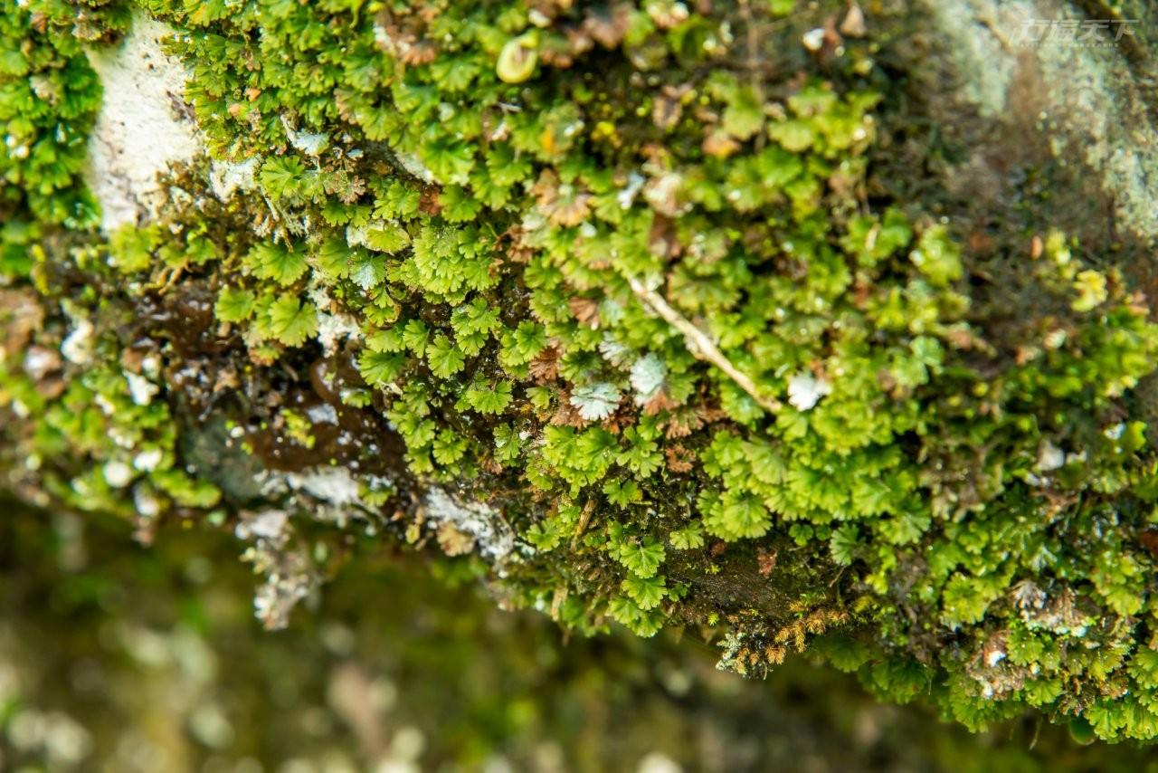 ▲必訪亮點5:豐富動植物生態。森林、瀑布、溪流交織的內洞國家森林遊樂區,孕育多元物種,成為最佳的戶外自然教室。(圖為團扇蕨)